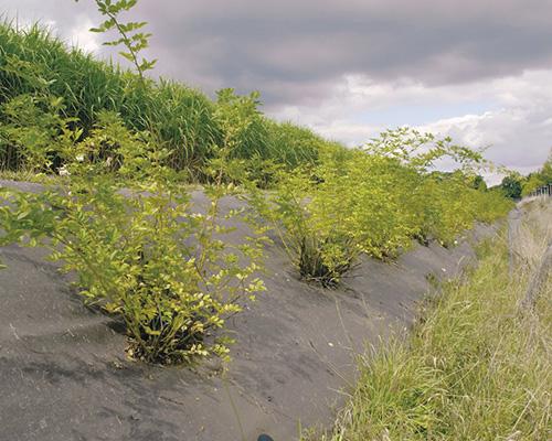 BioWeedtex géotextile de plantation écologique anti-mauvaises herbes