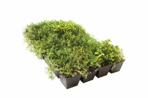 Sedum StockDrain bac précultivé pour toiture verte