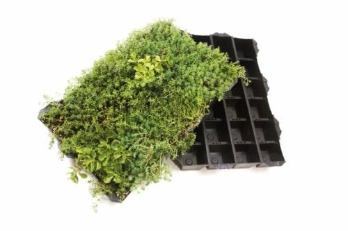Sedum StockDrain Bacs de sédum pour la végétalisation de toiture extensive