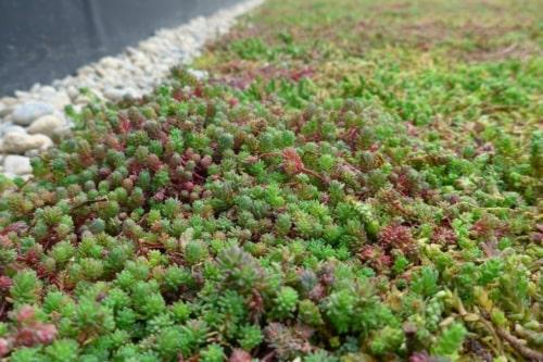 Bac de sédum pour toitures vertes Sedum StockDrain