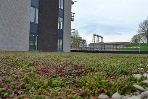 Bacs de sédums pour la végétalisation de toiture vertes extensive - Sedum StockDrain