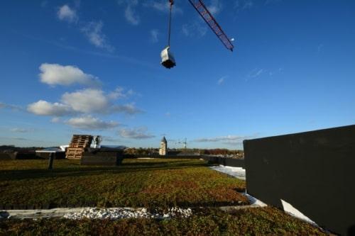 Sedum Stockdrain bac précultivé  à poser pour toiture verte
