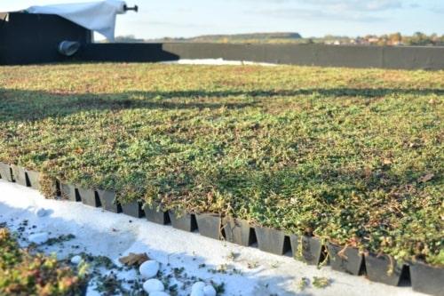 Dalle en plastique pré cultivée avec du sedum pour toiture jardin légère