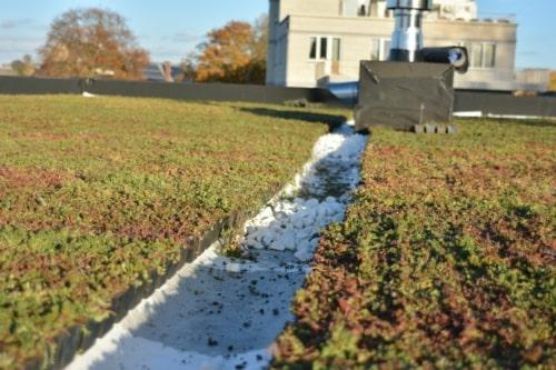 Sedum Stockdrain pour réaliser une toiture verte rapidement