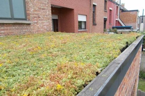 Sedum Stockdrain bacs en plastique pré-cultivés de sedums pour toiture verte