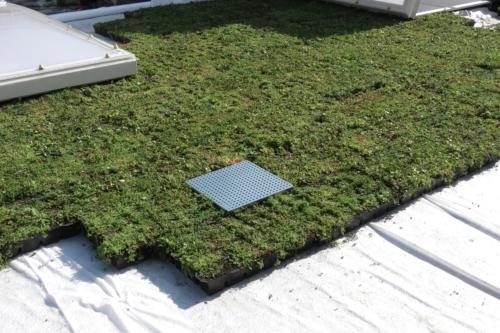 Sedum StockDrain avec HydraLook : grille d'avaloir pour toiture végétalisée