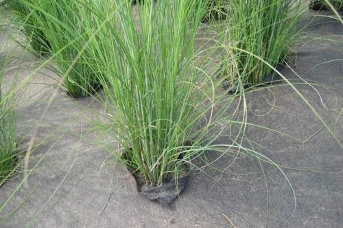 Weedtex le géotextile de paillage anti-mauvaise herbe noir - MatGeco