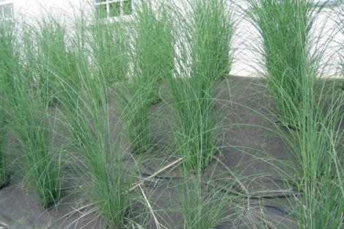 Weedtex est un géotextile non-tissé anti-mauvaise herbe qui permet de contrôler l'érosion