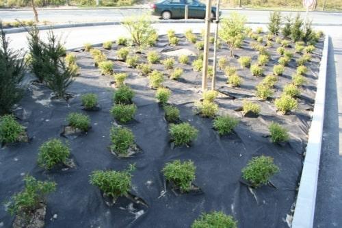 Les géotextiles de paillage Weedtex facilitent vos plantations et empêchent l'apparition de mauvaises herbes