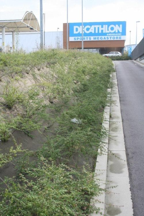 Le géotextile anti-mauvaises herbes Weedtex recouvre un talus - MatGeco