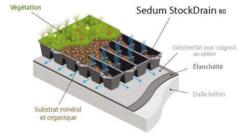 Sedum Stockdrain dalle pré-cultivée pour toiture verte
